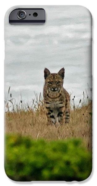 Bodega Bay Bobcat iPhone Case by Mitch Shindelbower