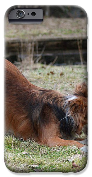 Border Collie Playing With Ball iPhone Case by Mark Taylor