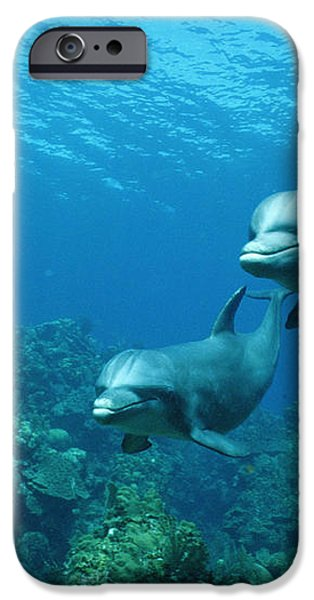 Bottlenose Dolphins and Coral Reef iPhone Case by Konrad Wothe