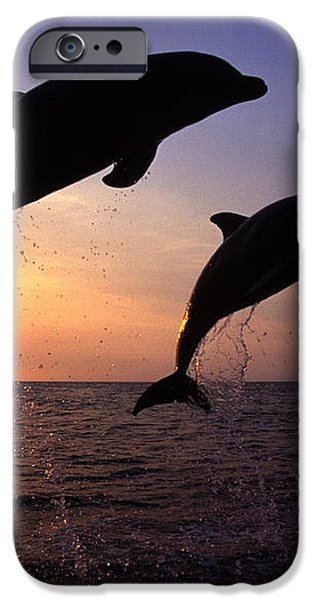 Bottlenose Dolphins iPhone Case by Francois Gohier and Photo Researchers