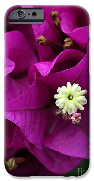 Florida Flowers Photographs iPhone Cases - Bouganvillea Macro iPhone Case by Sabrina L Ryan