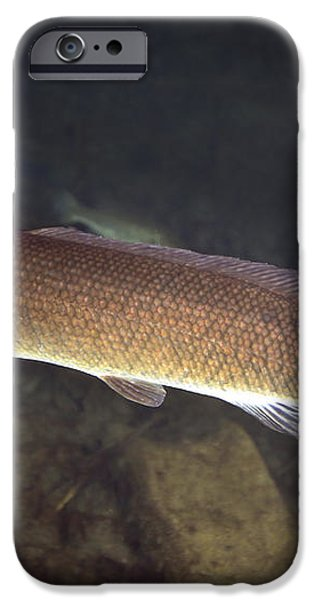 Bowfin Amia Calva Swims The Murky iPhone Case by Michael Wood