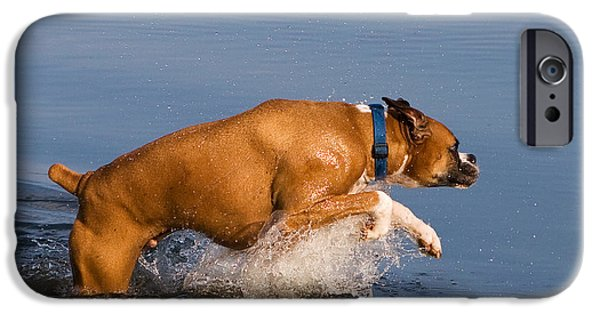 Boxer iPhone Cases - Boxer Playing in Water iPhone Case by Stephanie McDowell