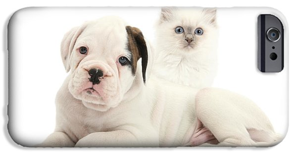 Boxer Puppy iPhone Cases - Boxer Puppy And Blue-point Kitten iPhone Case by Mark Taylor