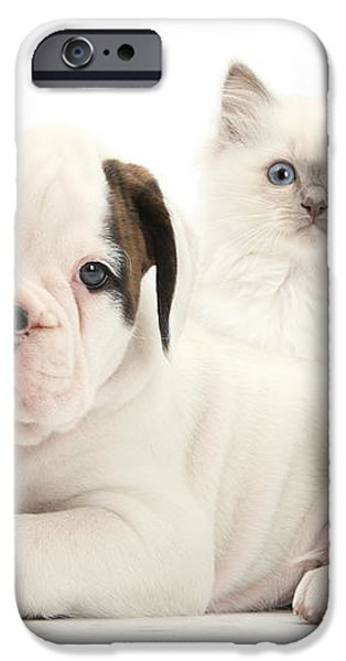 Boxer Puppy And Blue-point Kitten iPhone Case by Mark Taylor