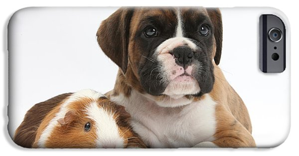Boxer Puppy iPhone Cases - Boxer Puppy And Guinea Pig iPhone Case by Mark Taylor