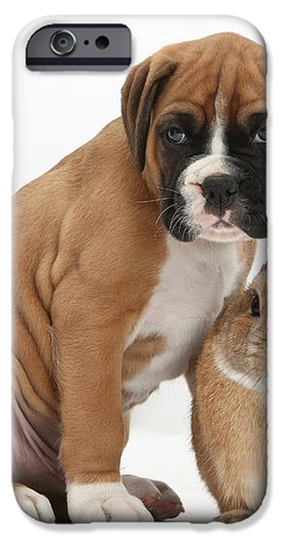Boxer Puppy And Netherland-cross Rabbit iPhone Case by Mark Taylor