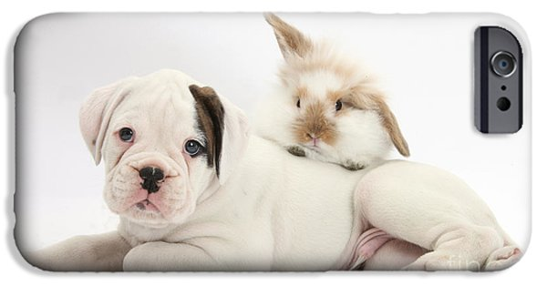 Boxer Puppy iPhone Cases - Boxer Puppy And Young Fluffy Rabbit iPhone Case by Mark Taylor