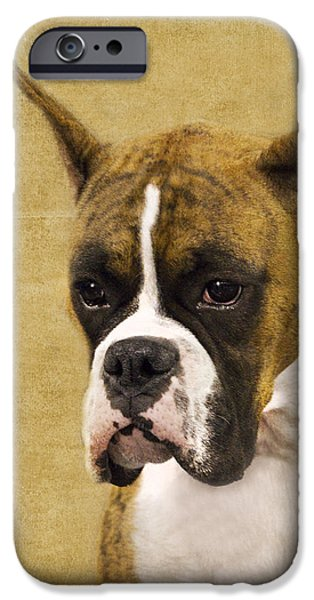 Boxer iPhone Case by Rebecca Cozart