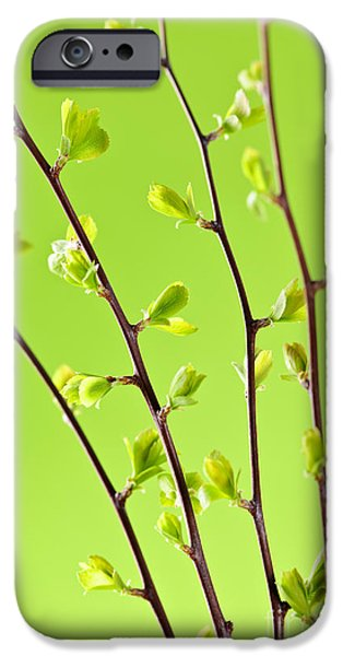 Spring iPhone Cases - Branches with green spring leaves iPhone Case by Elena Elisseeva