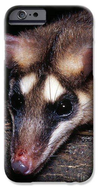 Four Animal Faces iPhone Cases - Brazilian Opossum iPhone Case by Dante Fenolio