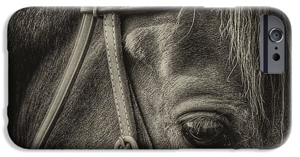 Monotone iPhone Cases - Bridled II iPhone Case by David Patterson