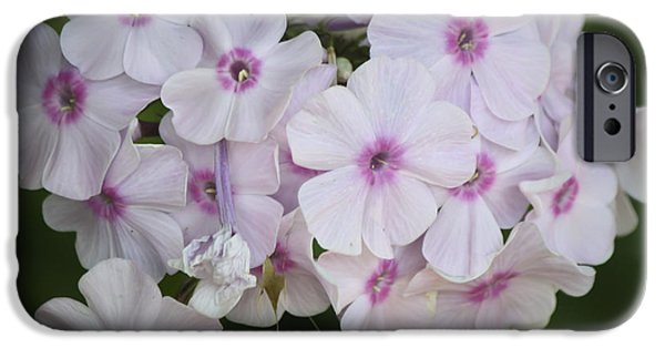 Phlox iPhone Cases - Bright Eyed Phlox Squared iPhone Case by Teresa Mucha