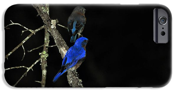 Baby Bird iPhone Cases - Brilliant Blues iPhone Case by Al Powell Photography USA