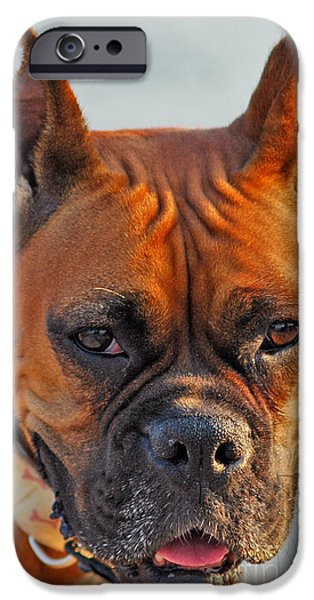 Bring it on iPhone Case by Joann Vitali