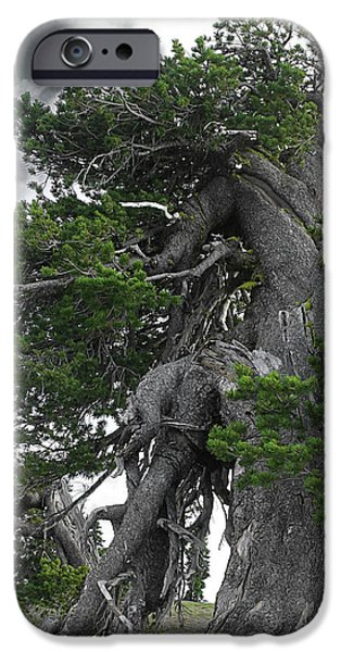 Survivor Art iPhone Cases - Bristlecone Pine tree on the rim of Crater Lake - Oregon iPhone Case by Christine Till