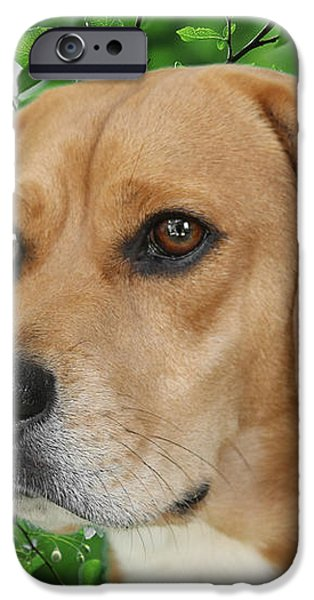 British Beauty iPhone Case by Christine Till