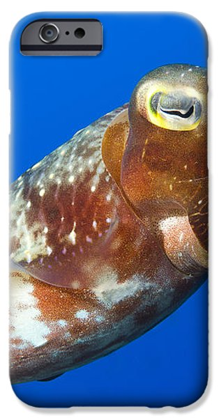 Broadclub Cuttlefish, Papua New Guinea iPhone Case by Steve Jones