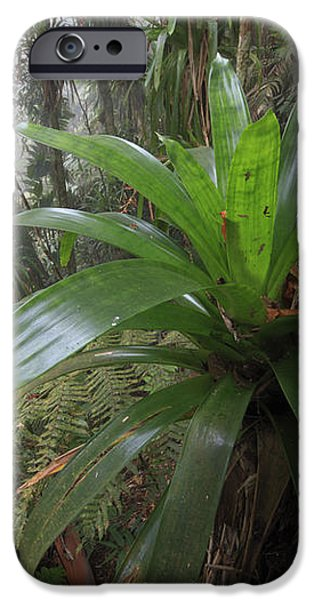 Bromeliad And Tree Ferns Colombia iPhone Case by Cyril Ruoso