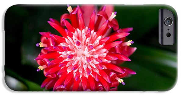 Bromeliad iPhone Cases - Bromeliad bloom iPhone Case by Rich Franco