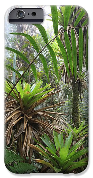 Bromeliads And Tree Ferns  iPhone Case by Cyril Ruoso