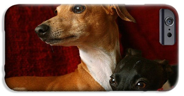 Rescued Greyhound iPhone Cases - Brothers Italian Greyhounds iPhone Case by Angela Rath
