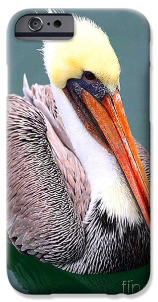 Brown Pelican . 7D8291 iPhone Case by Wingsdomain Art and Photography