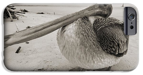 Sepia iPhone Cases - Brown Pelican Folly Beach Morris Island Lighthouse Close Up iPhone Case by Dustin K Ryan
