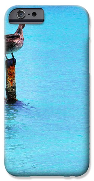 Brown Pelicans in Aruba iPhone Case by Thomas R Fletcher