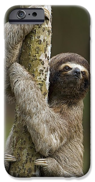 Sloth iPhone Cases - Brown-throated Three-toed Sloth iPhone Case by Ingo Arndt