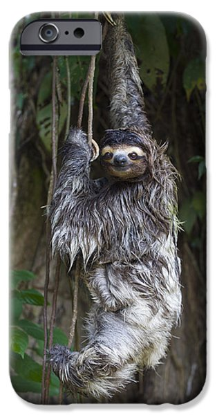 Brown Throated Three Toed Sloth Mother iPhone Case by Suzi Eszterhas
