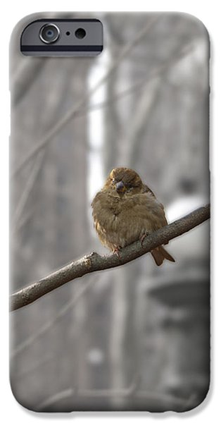 Bryant Park Bird NYC iPhone Case by Henri Irizarri