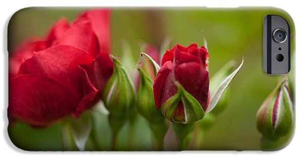 Roses iPhone Cases - Bud Bloom Blossom iPhone Case by Mike Reid