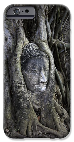Head Stone iPhone Cases - Buddha Head in Tree iPhone Case by Adrian Evans