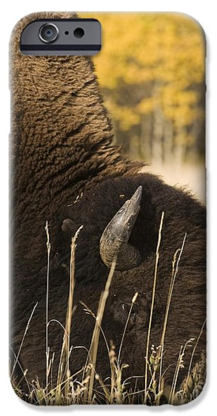 Buffalo Grazing iPhone Case by Philippe Widling