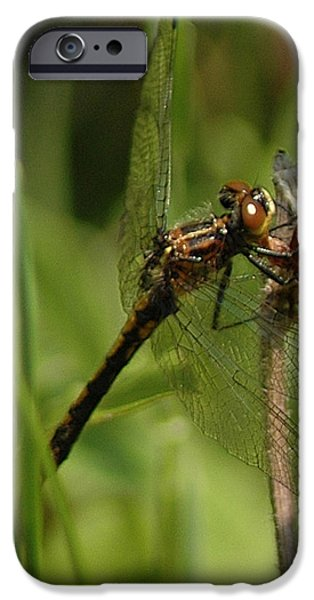 Nature Center Pond iPhone Cases - Bug Eyed Dragon Fly iPhone Case by LeeAnn McLaneGoetz McLaneGoetzStudioLLCcom