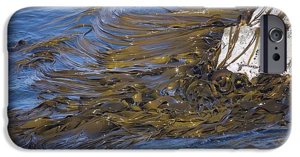 Algal Photographs iPhone Cases - Bull Kelp Bed iPhone Case by Bob Gibbons