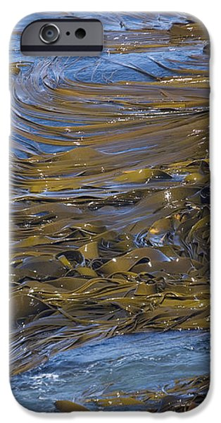 Bull Kelp Bed iPhone Case by Bob Gibbons