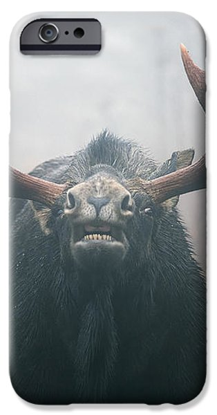 Bull Moose Testing Air For Pheromones iPhone Case by Philippe Henry