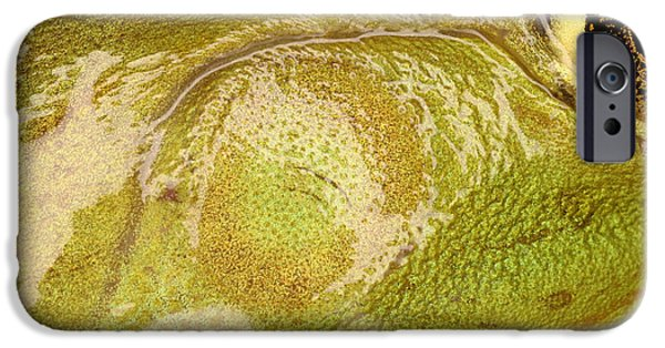 Amphibians Photographs iPhone Cases - Bullfrog Ear iPhone Case by Ted Kinsman