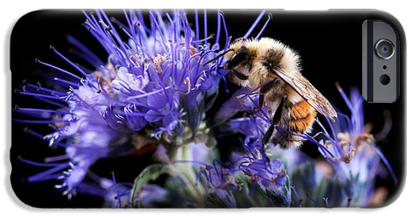 Spirea iPhone Cases - Bumble Bee on Blue Flower iPhone Case by Cindy Singleton