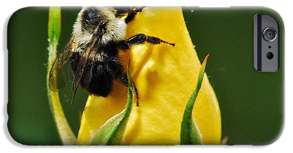 Rosaceae iPhone Cases - Bumble bee on rose  iPhone Case by Michael Peychich