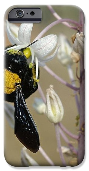 Bumblebee On Sea Squill Flowers iPhone Case by Photostock-israel