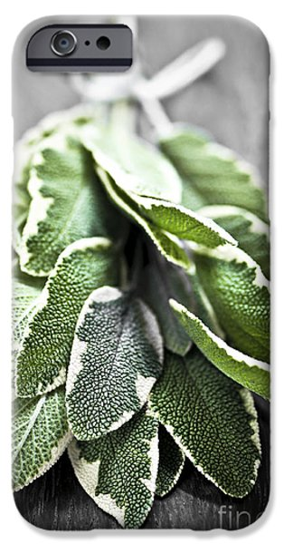Board iPhone Cases - Bunch of fresh sage iPhone Case by Elena Elisseeva