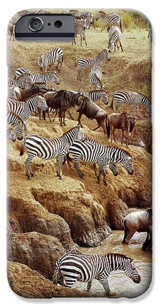 White Beard iPhone Cases - Burchells Zebra Equus Burchellii iPhone Case by Gerry Ellis