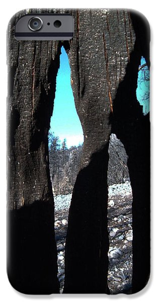Rural iPhone Cases - Burned Trees 10 iPhone Case by Naxart Studio