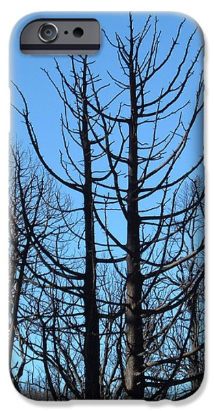 Field. Cloud iPhone Cases - Burned Trees 2 iPhone Case by Naxart Studio