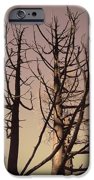Field. Cloud iPhone Cases - Burned Trees 3 iPhone Case by Naxart Studio