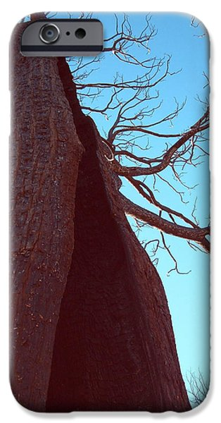 Burn iPhone Cases - Burned Trees 6 iPhone Case by Naxart Studio