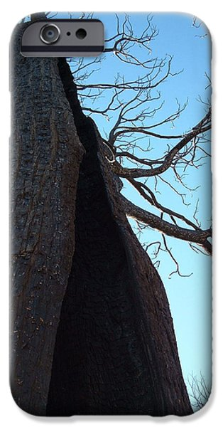 Rural iPhone Cases - Burned Trees 7 iPhone Case by Naxart Studio